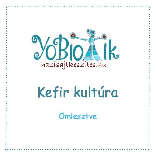 kefir kultúra